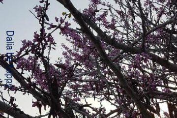 התחדשות אביבית